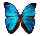 aqua-b-fly-1.5x72-clear