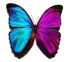 pink-aqua-bfly-1