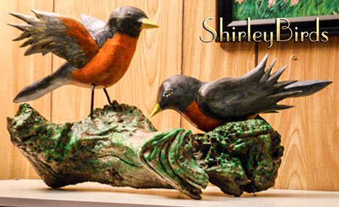 2015-American-Robins-by-ShirleyBirds