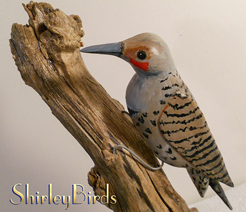 2015-Northern Flicker by ShirleyBirds