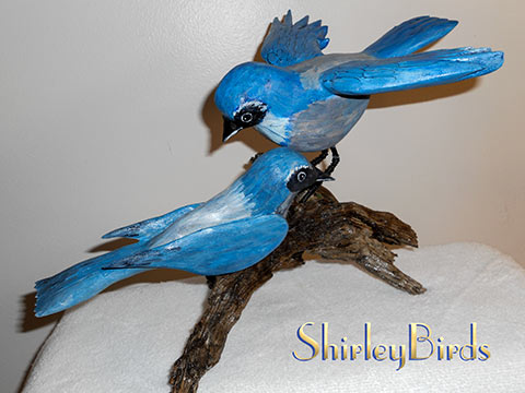 2014  2 Woodhouse Jays by ShirleyBirds